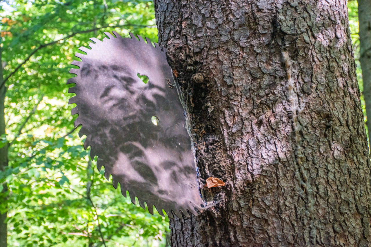 Píla v strome